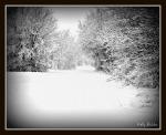 11 30 2010 Winter Trails1