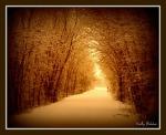 11 30 2010 Winter Trails2