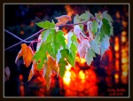Frosty Fall Sunrise