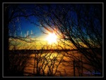 Twinkling_Trees_1a